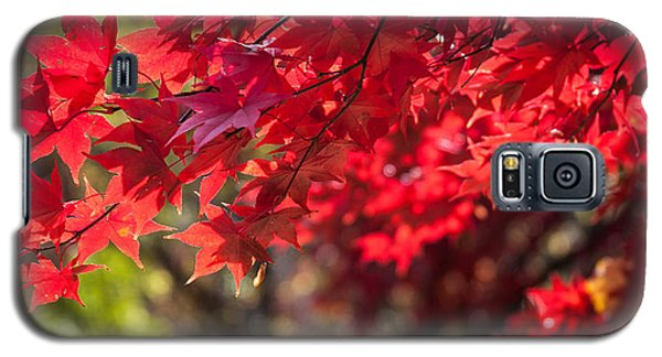 Galaxy S5 Case featuring the photograph The Color Of Fall by Patrice Zinck