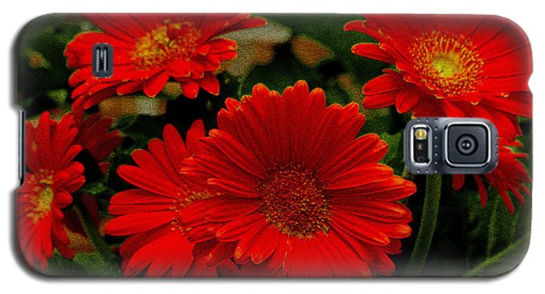 Gerbera Daisies Red Galaxy S5 Case