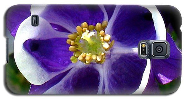 The Columbine Flower Galaxy S5 Case by Patti Whitten