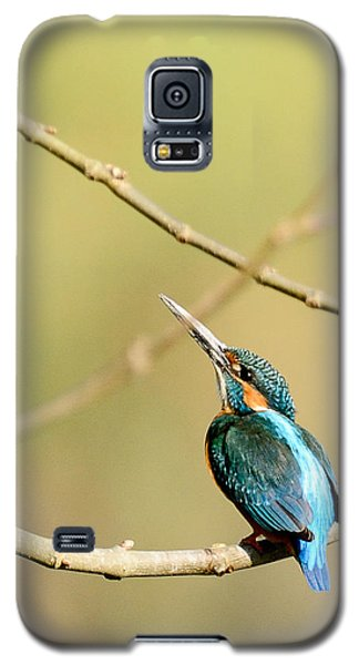 The Common Kingfisher Galaxy S5 Case