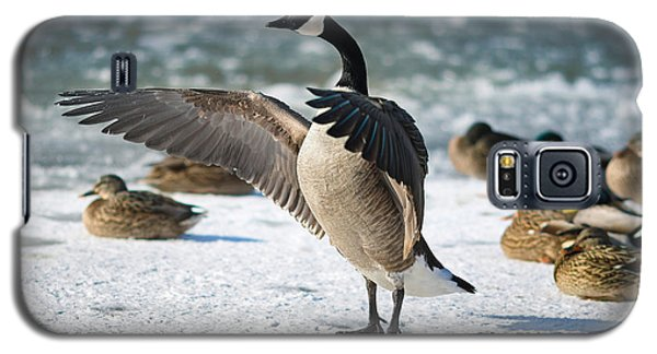 Geese Galaxy S5 Case - The Conductor by Rob Blair