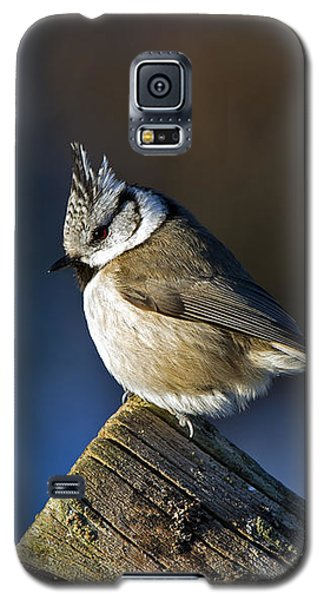 The Crested Tit In The Sun Galaxy S5 Case