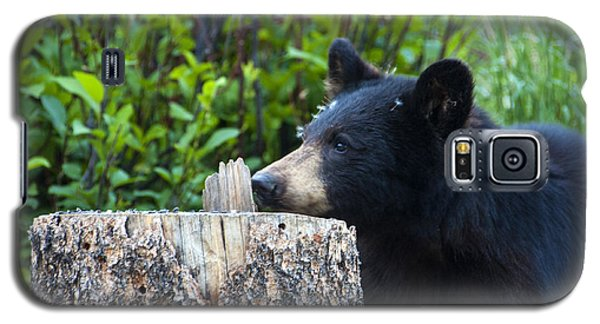 The Cub That Came For Lunch 1 Galaxy S5 Case