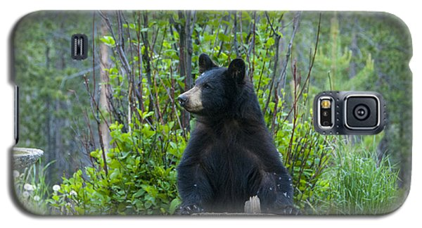 The Cub That Came For Lunch 3 Galaxy S5 Case