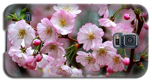 The Delicate Cherry Blossoms Galaxy S5 Case by Patti Whitten