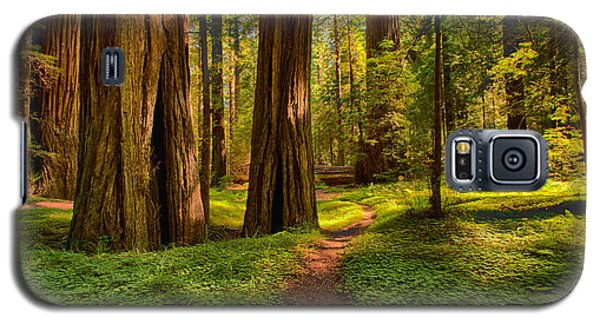 The Destination - California Redwoods I Galaxy S5 Case
