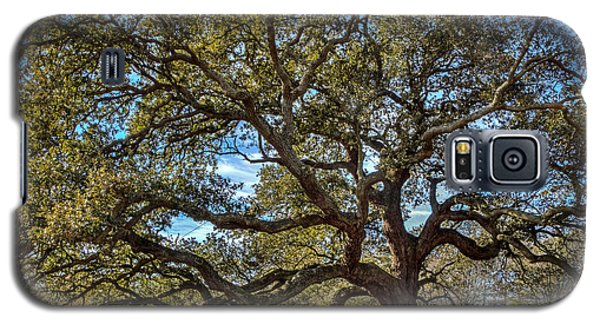 The Emancipation Oak Tree At Hu Galaxy S5 Case