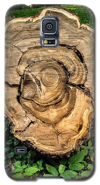 Galaxy S5 Case featuring the photograph The End Of A Tree Life Tale by Vladimir Kholostykh