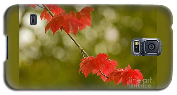 The Essence Of Autumn Galaxy S5 Case by Nick  Boren
