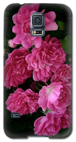 The Fence Roses Galaxy S5 Case by Louise Kumpf