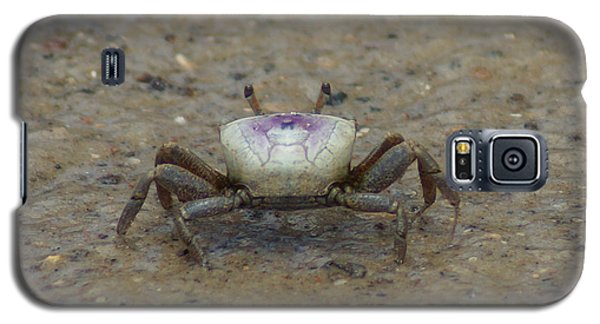 The Fiddler Crab On Hilton Head Island Galaxy S5 Case by Kim Pate