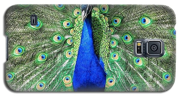 Galaxy S5 Case featuring the photograph The Flirty Peacock by Nikki McInnes