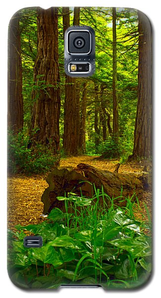 The Forest Of Golden Gate Park Galaxy S5 Case
