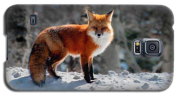 The Fox 3 Galaxy S5 Case