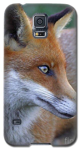 The Fox Galaxy S5 Case