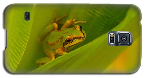 Galaxy S5 Case featuring the photograph The Frog by Dennis Bucklin