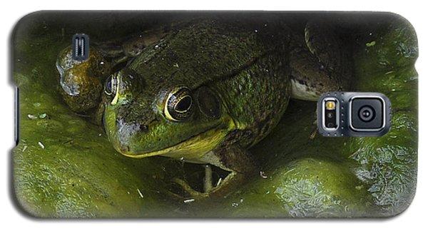 The Frog Galaxy S5 Case by Verana Stark