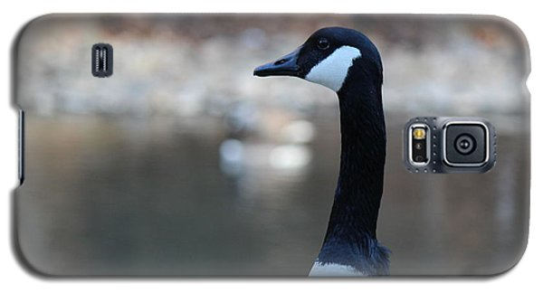 Galaxy S5 Case featuring the photograph The Gander by David Jackson