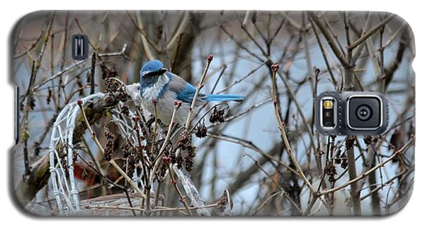 Galaxy S5 Case featuring the photograph The Gathering Blue Jay by Marjorie Imbeau