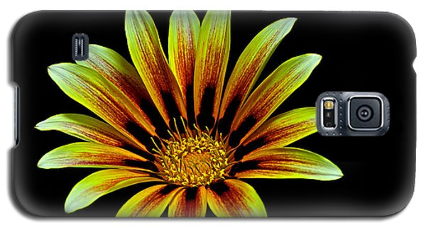 Galaxy S5 Case featuring the photograph The Gazania by Marwan Khoury