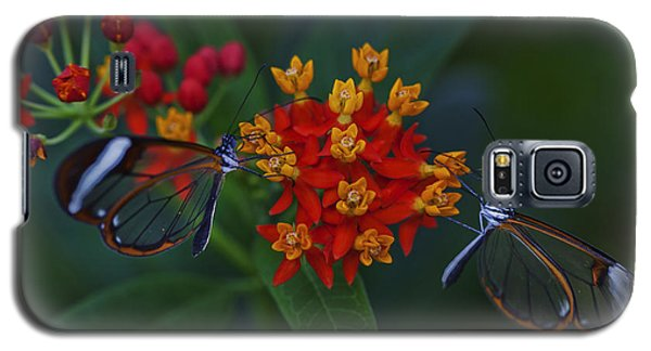 The Glasswinged Butterfly Galaxy S5 Case
