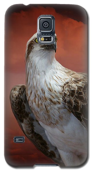 Galaxy S5 Case featuring the photograph The Glory Of An Eagle by Holly Kempe