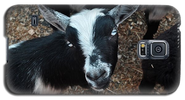 Galaxy S5 Case featuring the photograph The Goat With The Gorgeous Eyes by Verana Stark