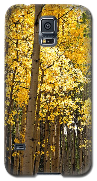 Galaxy S5 Case featuring the photograph The Golden Tree by Eric Rundle