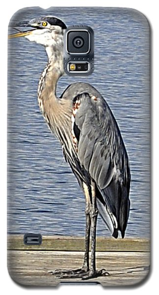 The Great Blue Heron Photo Galaxy S5 Case