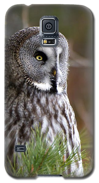 The Great Grey Owl Galaxy S5 Case