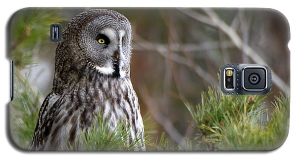 The Great Grey Owl Galaxy S5 Case by Torbjorn Swenelius