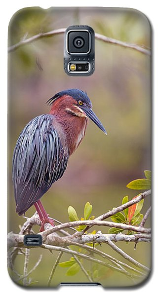 The Green Heron At Blue Hole Galaxy S5 Case