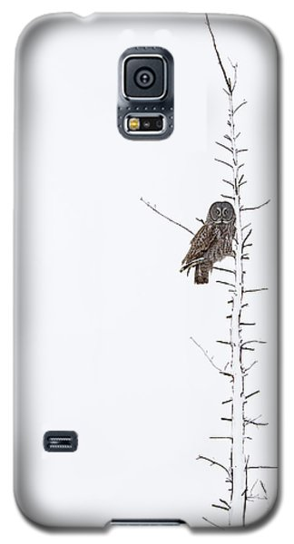 The Grey Hunter On White Galaxy S5 Case by Mircea Costina Photography