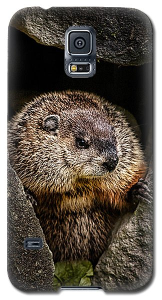 The Groundhog Galaxy S5 Case by Bob Orsillo