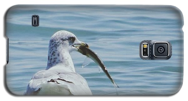 Galaxy S5 Case featuring the photograph The Hungry Seagull by Nikki McInnes
