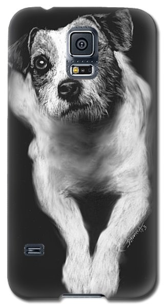 The Jack Russell Stare- Got Ball? Galaxy S5 Case