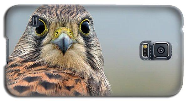 The Kestrel Face To Face Galaxy S5 Case by Torbjorn Swenelius