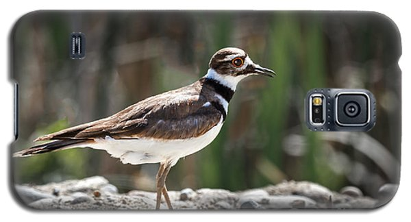 The Killdeer Galaxy S5 Case by Robert Bales