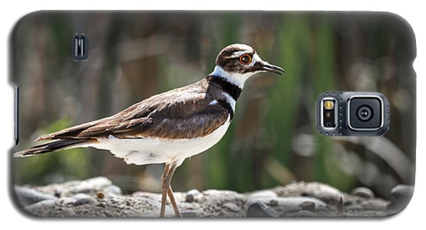 The Killdeer Galaxy S5 Case