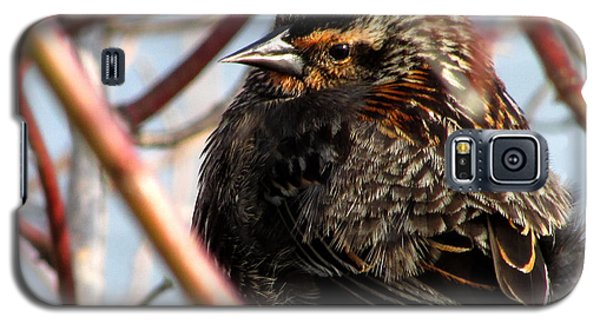 The Lady Blackbird Galaxy S5 Case
