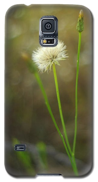 Galaxy S5 Case featuring the photograph The Last Dandelion by Suzanne Powers