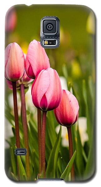 The Last Drops Of Dew Galaxy S5 Case by Melinda Ledsome