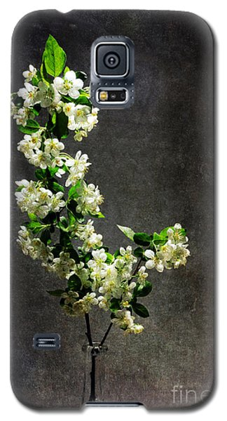 The Light Season Galaxy S5 Case