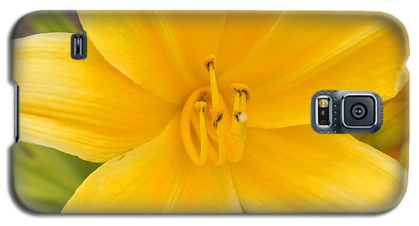 Galaxy S5 Case featuring the photograph The Lily From Kentucky by Verana Stark