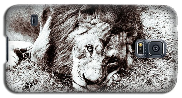 Galaxy S5 Case featuring the photograph The Lion Sleeps Tonight by Wade Brooks