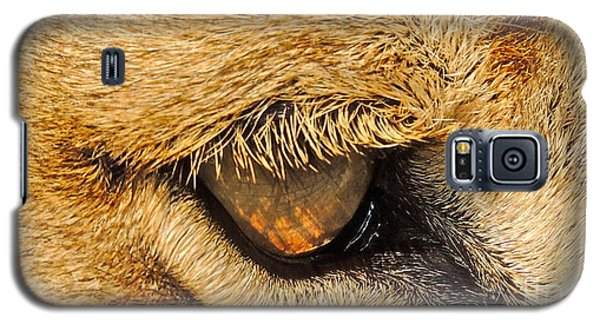 The Lion's Eye Galaxy S5 Case by Eve Spring