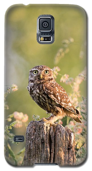 The Little Owl Galaxy S5 Case by Roeselien Raimond
