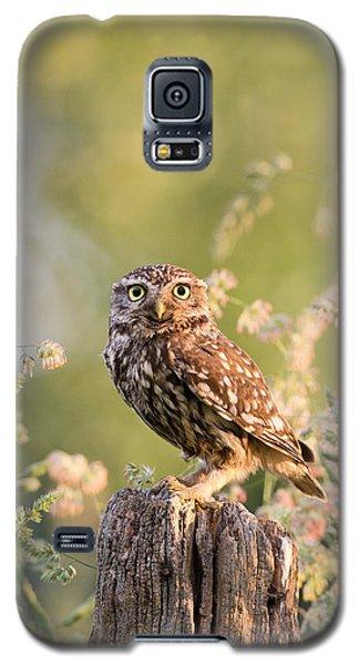 The Little Owl Galaxy S5 Case by Roeselien Raimond