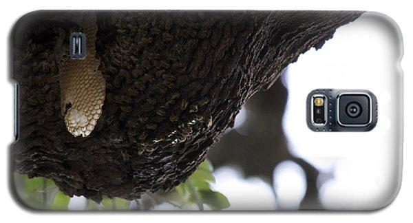 The Live Oak Galaxy S5 Case by Shawn Marlow