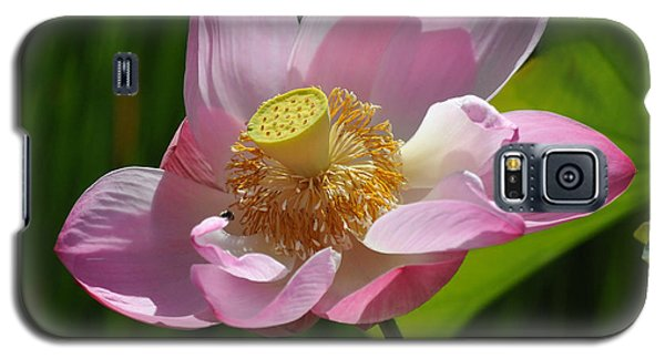 Galaxy S5 Case featuring the photograph The Lotus by Vivian Christopher